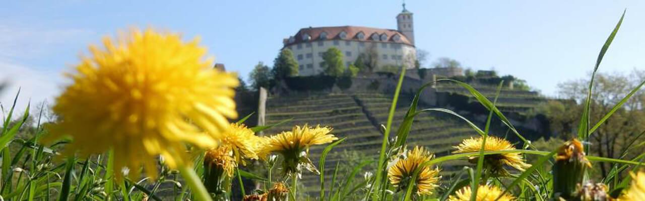 Vaihingen Schloss Löwenzahn