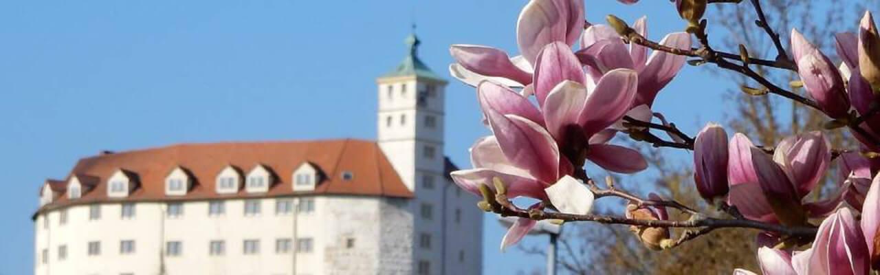Vaihingen Schloss mit Magnolien